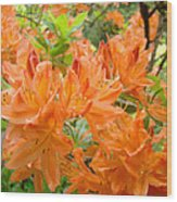 Floral Art Prints Orange Rhodies Flowers Wood Print
