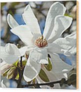 Floral Art Prints White Magnolia Flowers Wood Print