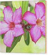 Floral Background. Desert Rose. Wood Print