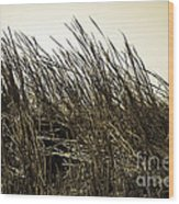 Florida Everglades 6 Wood Print