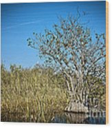 Florida Everglades 8 Wood Print