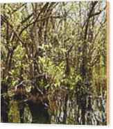 Florida Everglades 9 Wood Print