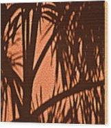 Florida Palm Shadow Wood Print