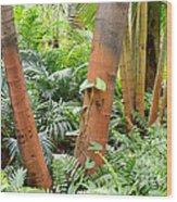 Florida Palms And Ferns Wood Print