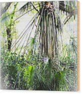 Florida Palms Wood Print