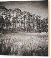 Florida Pine 2 Wood Print