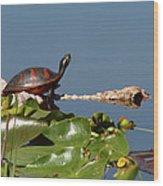 Florida Redbelly Turtle Wood Print