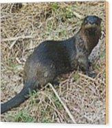 Florida River Otter Wood Print by Lynda Dawson-Youngclaus