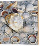 Florida Shells Wood Print