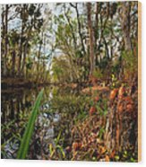 Florida Stream Wood Print