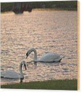 Florida Swans Wood Print