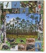 Florida Wildlife Photo Collage Wood Print