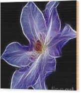 Flower - Clematis - Abstract Wood Print