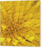 Flower - Dandelion Wood Print
