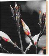 Flower 12 Wood Print