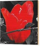 Flower 23 Wood Print