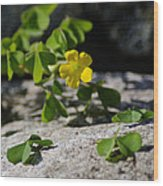Flower And Dancing Clover Wood Print