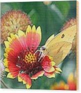 Flower Butterfly Wood Print