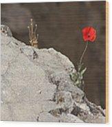 Flower By The Pool Of Bethesda - Israel Wood Print