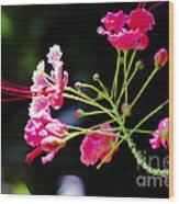 Flower Digital Painting Wood Print