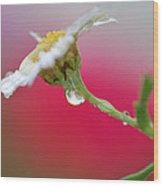 Flower In Red Wood Print