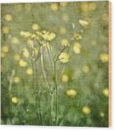 Flower Of A Buttercup In A Sea Of Yellow Flowers Wood Print