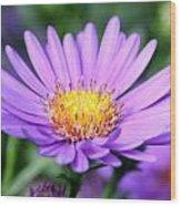 flower of September Wood Print