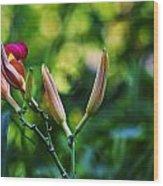 Flower Of Summer Wood Print