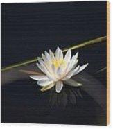 Flower Of The Marsh Wood Print