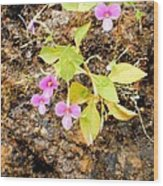 Flower On Rocks Wood Print