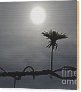 Flower On The Fence Wood Print