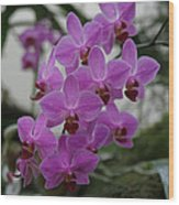Flower Painting 0009 Wood Print by Metro DC Photography