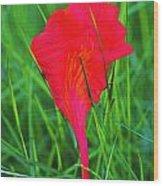 Flower Petal And Grass- St Lucia Wood Print