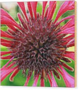 Flower Pink Wood Print