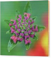 Flower Pop Wood Print