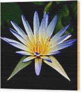 Flower Symmetry Wood Print