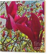 Flower-tree-the Tulip Tree Wood Print