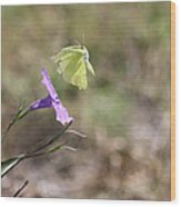 Flower Which Did Sway The Butterfly Flew Away Wood Print