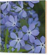 Flower Wild Blue Phlox 1 B Wood Print