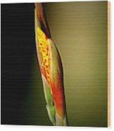 Flowerbud Wood Print