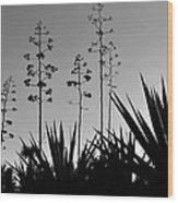 Flowering Agaves Wood Print