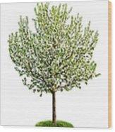 Flowering Apple Tree Wood Print