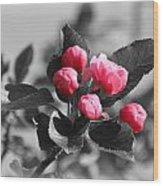 Flowering Crabtree In Select Color Wood Print by Mark J Seefeldt