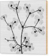 Flowering Dogwood, X-ray Wood Print