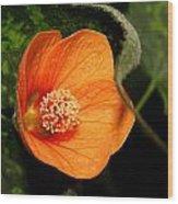 Flowering Maple Singe Flower Wood Print