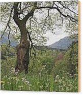 Flowering Maple Tree  Wood Print