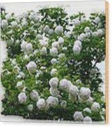 Flowering Snowball Shrub Wood Print