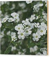 Flowering Spurge Wood Print
