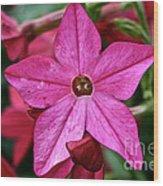 Flowering Tobacco Wood Print
