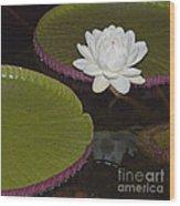 Victoria Amazonica White Flower Wood Print